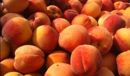 Сезонът на евтините плодове