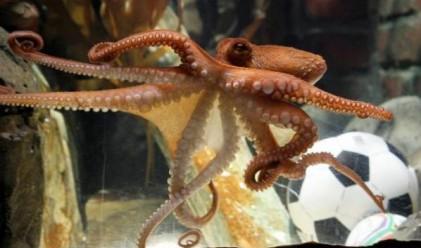 Оцениха октопода Паул на 100 000 евро