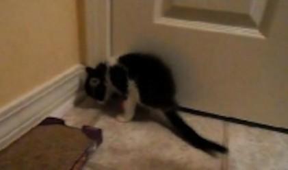 Коте с два крака стана истински хит в нета (снимки+видео)
