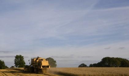 Очакват 4 млн. тона пшеница да приберат след жътвата