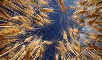420 лв. за тон пшеница в Добричко