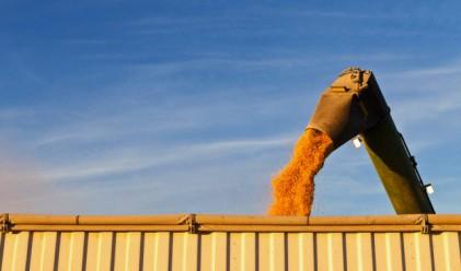 Пшеницата прибрана на 90%