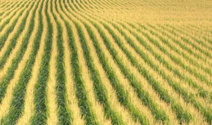 Най-големите производители на земеделска продукция в света