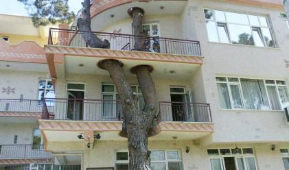 Много добри примери за съжителство между хора и дървета