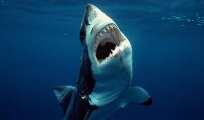 Фотограф вярва, че е заснел една от най-големите бели акули