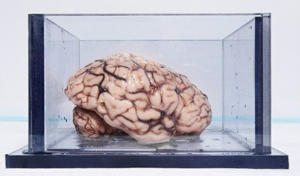 Най-известният мозък в света