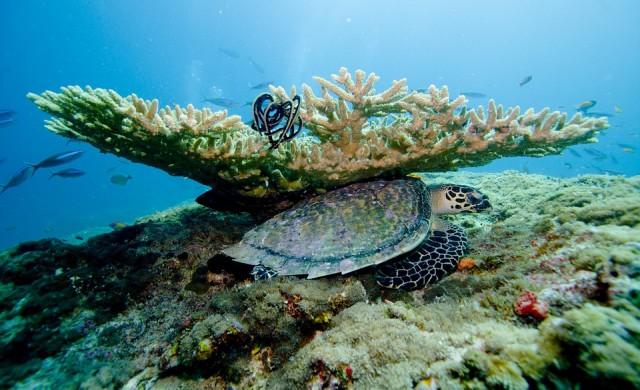 ЮНЕСКО не вписа Големия бариерен риф в защитения си списък