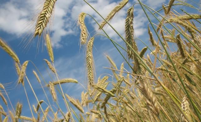 Консумацията на кои храни ще намалее в идните десет години?