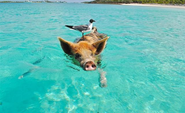 13 странни факти за Бахамите