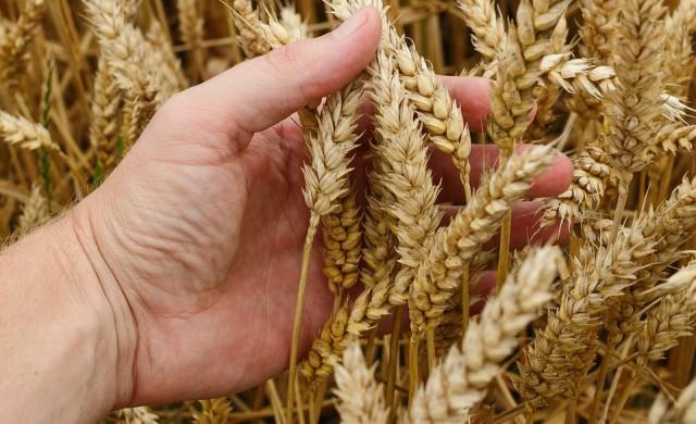 Защо Китай купува семената на света?