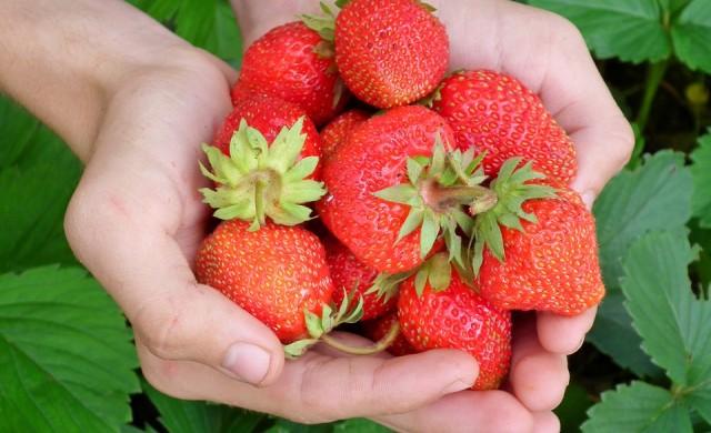 Най-добрите и най-лошите плодове за спазващите диета