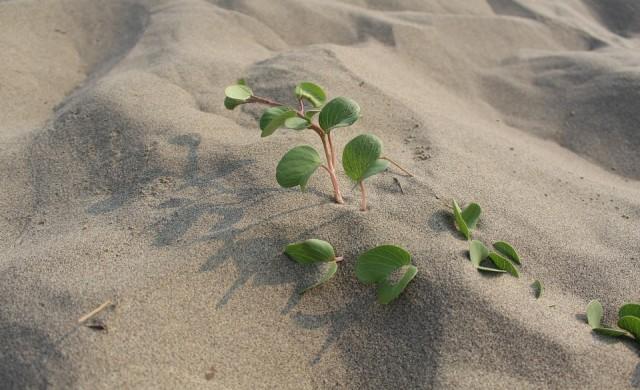 Свършва ли пясъкът в света и защо това е тревожно?