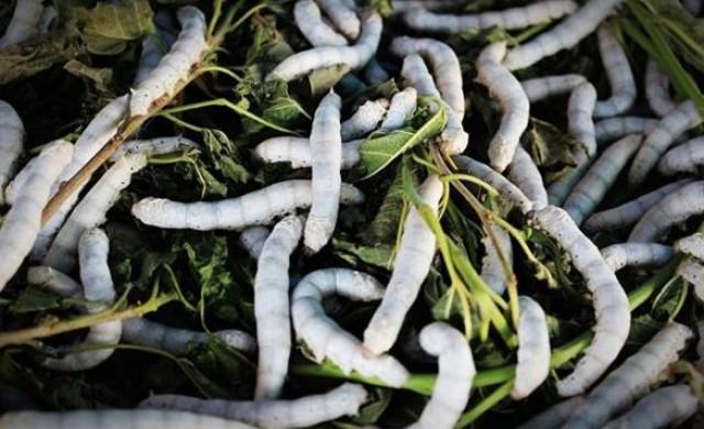 Храната на бъдещето: инвеститори залагат на насекомите