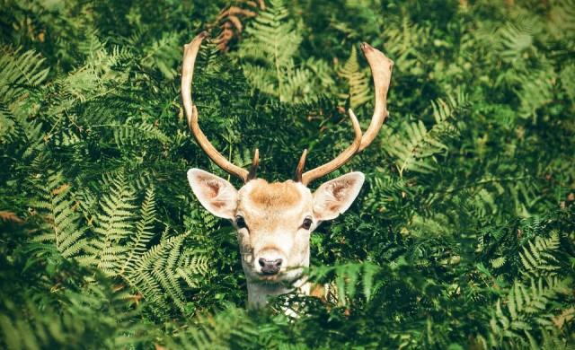Интересни факти за животните, споделени от служители в зоопарк