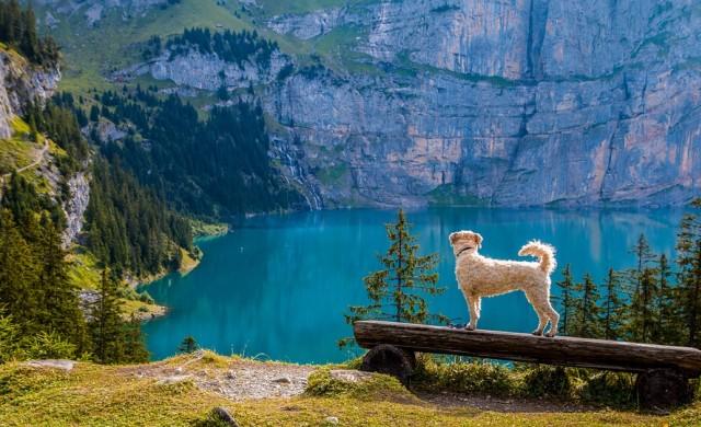 В Швейцария се продават къщи за 1 франк