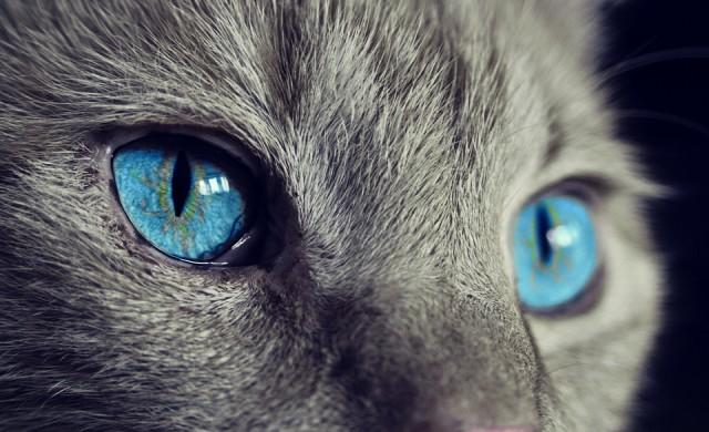 Тези котки имат най-завладяващите очи в света (снимки)
