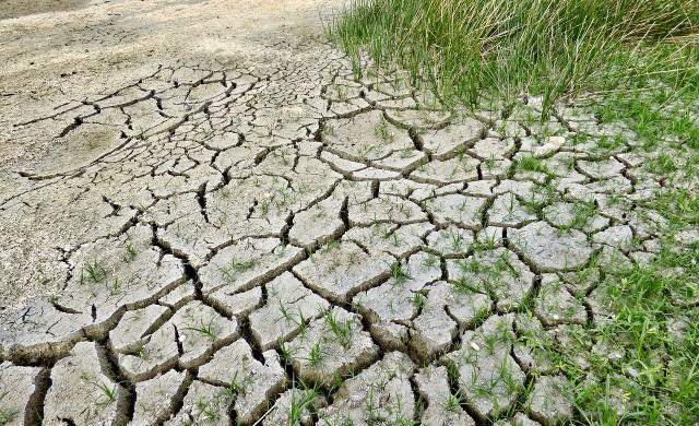 За първи път в България - земеделска застраховка срещу суша