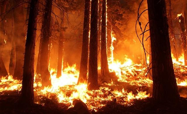 Огромни горски пожари избухнаха в Амазония
