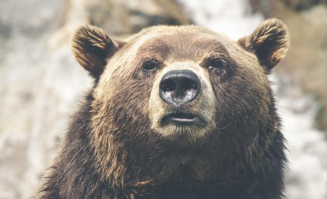 Какво да правите при среща с мечка? Съветите на експерт