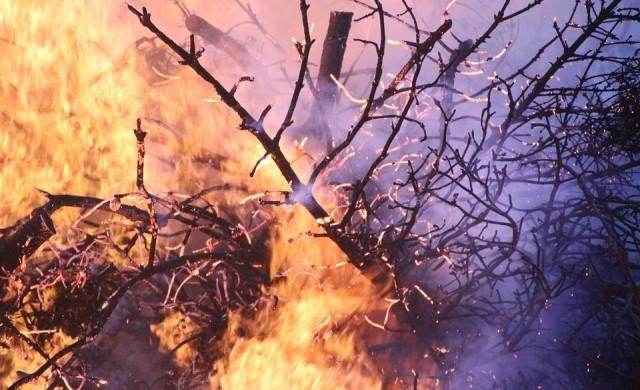 Пожари бушуват в 8 турски провинции, евакуират туристи