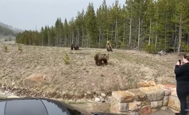 Съдят жена, приближила се до мечка и малките ѝ