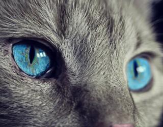 Приложение следи здравословното състояние на котките