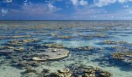 Нов петролен разлив откриха при Бяла