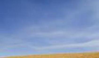 Пшеницата продължава да поскъпва до нови рекордни нива