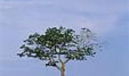 Правителството ще забрани износа на опожарена дървесина
