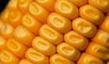 С 44.5 на сто са поскъпнали зърнените култури за второто тримесечие