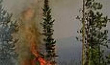 Над 1.5 млрд. евро са щетите от пожарите в Гърция