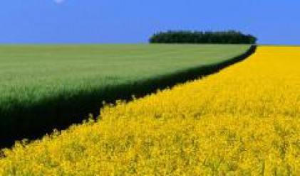При среден добив от 390 кг/дка пшеница приключи жътвата във Видинско