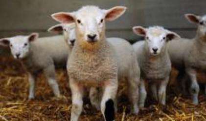 Родни стопани се изнасят в Гърция със стадата си