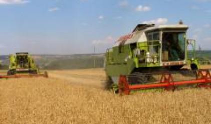 Няма пазар за зърното у нас