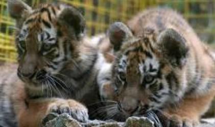 2.9 млн. лева за издръжка на столичния зоопарк