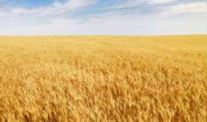 ЕС очаква с 16% по-голяма реколта на зърнени храни