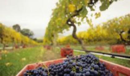 Акциз: България не може да възстанови износа си на вино за Русия