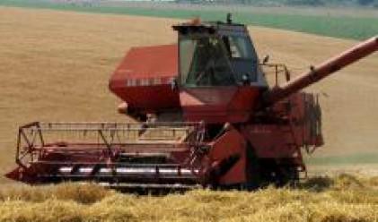Цената на пшеницата от новата реколта се закрепи на 270-280 лв. за тон