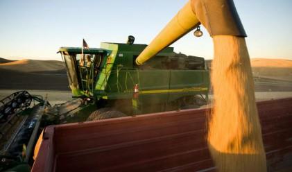 Жътвата на пшеницата в Ямболско приключва