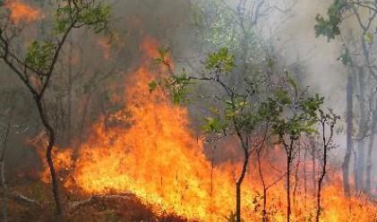 В Русия бушуват 80 горски пожара