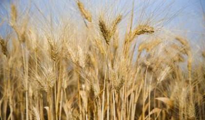Задава се световна криза за зърно