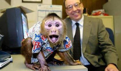 3 маймуни, които подбират акции по-добре от някои хора