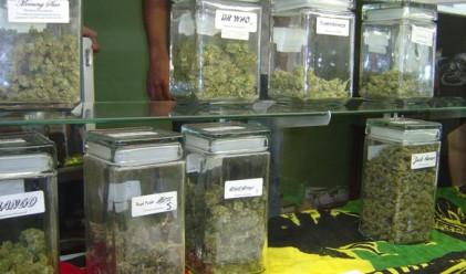Леката дрога в Холандия само за холандци и съседи