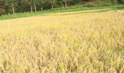Найденов: Има огромен интерес към пшеницата на България