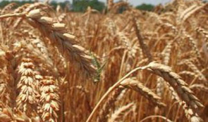 Цените на селскостопанските стоки у нас скачат с 36%