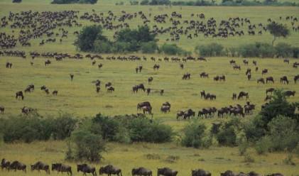 Преброиха 8.7 млн. биологични видове на Земята