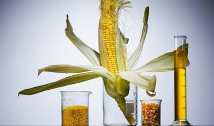 С 40% по-ниски добиви от царевица