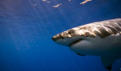Десет неща, по които банкерите и акулите си приличат