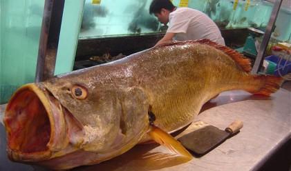 Риба за 473 хил. долара