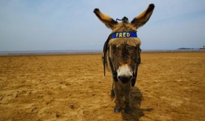 Оборудваха магарета с безжичен интернет